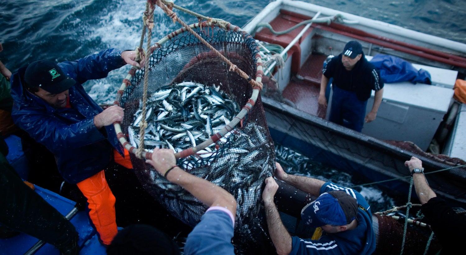 Resultado de imagem para Frota portuguesa autorizada a pescar mais 4.760 toneladas de sardinha até fim do ano