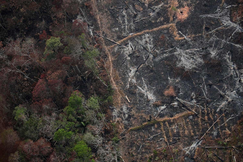 Área desflorestada /Ueslei Marcelino - Reuters