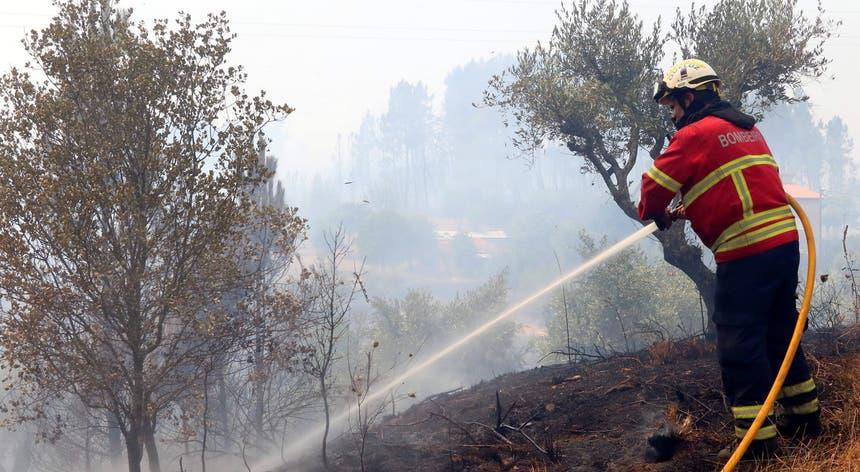 O incêndio nos concelhos de Vila de Rei e Mação consumiu 9.631 hectares de floresta