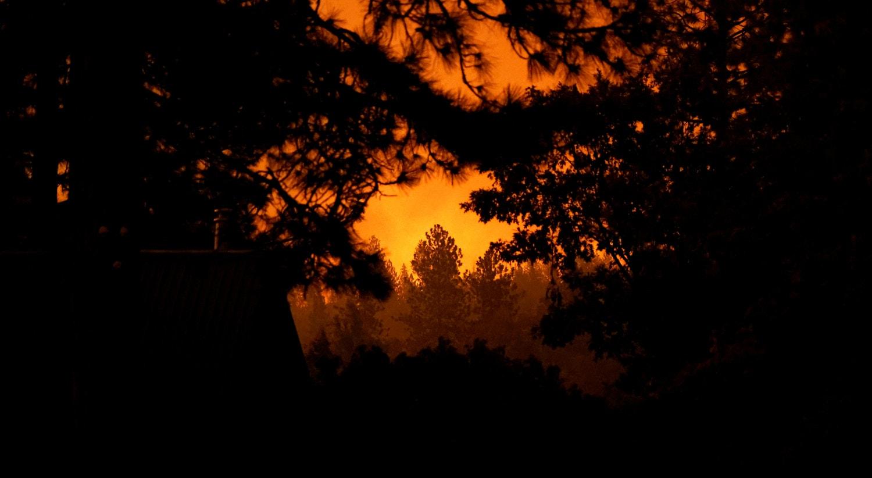 Floresta Nacional da Serra, Califórnia. | Stephen Lam/Reuters