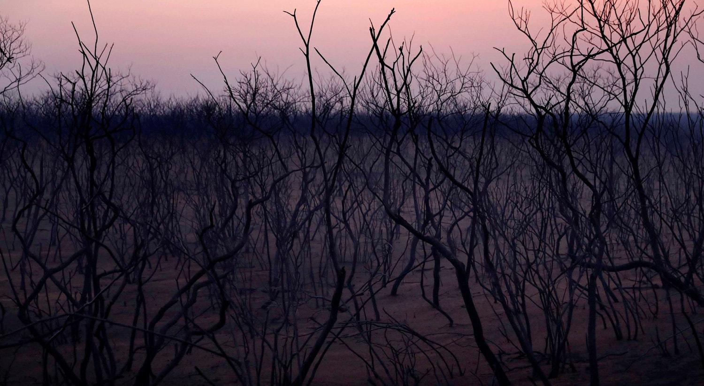 As árvores carbonizadas entre Bolívia e Brasil, 23 de setembro 2019 /Edgard Garrido - Reuters