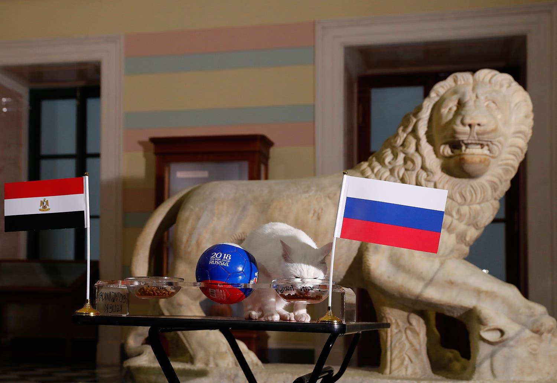 Acertou na previsão do jogo entre a Rússia e o Egito /Foto: Anatoly Maltsev - EPA