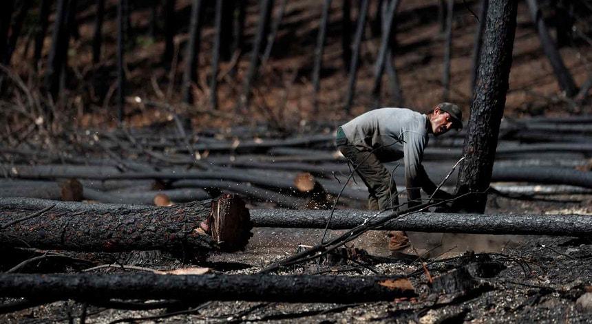 Governo explicou que os prejuízos nos concelhos atingidos pelos incêndios já foram cobertos pelo Fundo de Emergência Nacional e pelo Programa Operacional do Centro