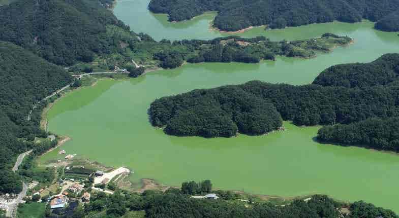 Coreia do Sul. Explosão de algas