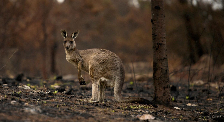 Corbago, na Austrália a janeiro de 2020 /Tracey Nearmy - Reuters