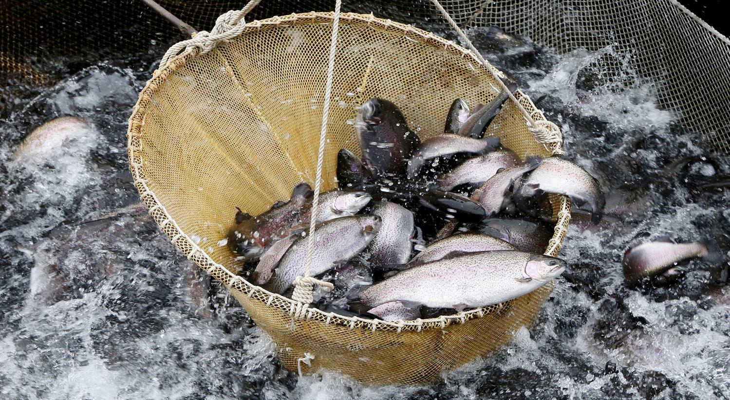 """Pesca elétrica pode tornar """"oceano num deserto"""""""