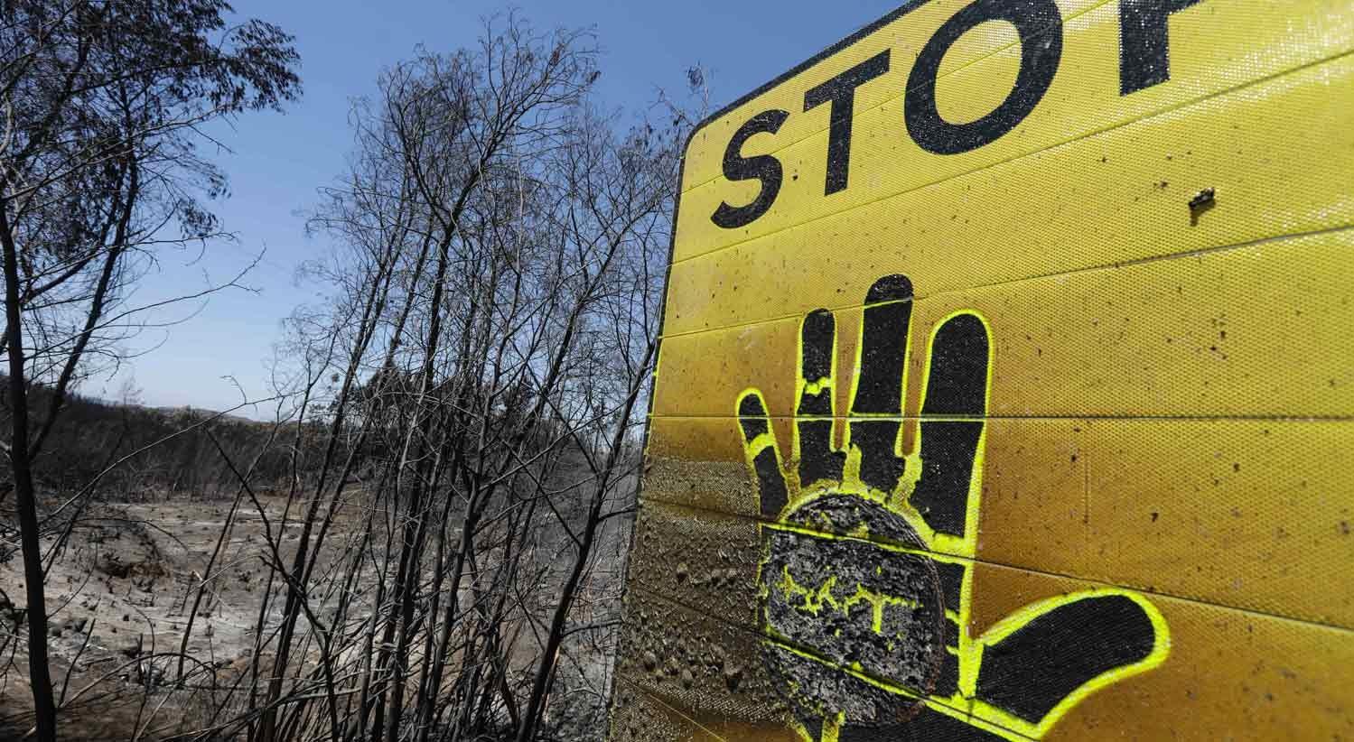 Resultado de imagem para Incêndios: Quase 53 mil hectares arderam na região centro