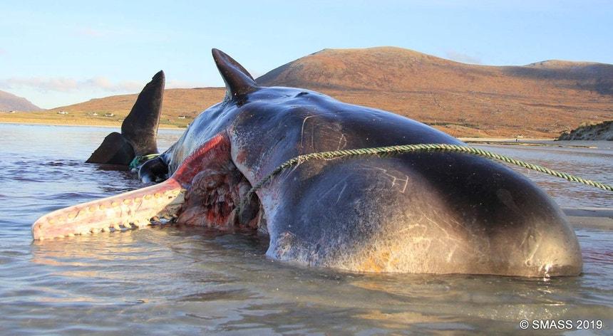 Imagem da baleia que foi encontrada na praia