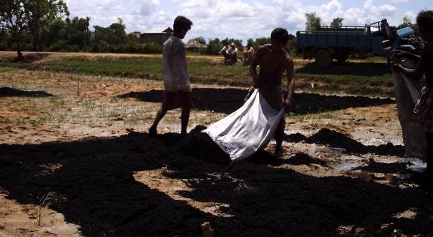 Vários países estão a fazer experiências com biochar. A imagem foi tirada em campos de arroz do Cambodja em 2010