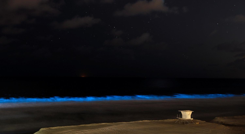 Algas bioluminescentes na Califórnia, nos Estados Unidos. 18 de abril de 2020 /Mike Blake - Reuters
