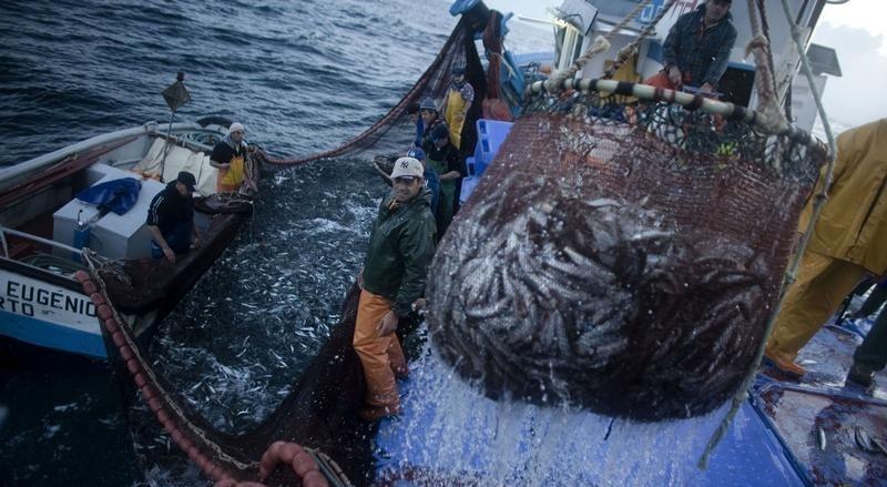 Pescadores em Matosinhos