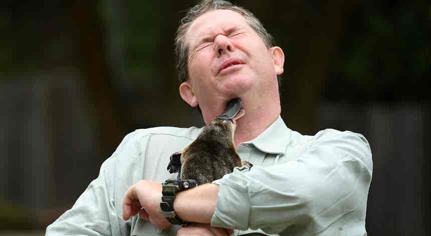 Zoológico de Taronga, na Austrália. Mimos de ornitorrinco