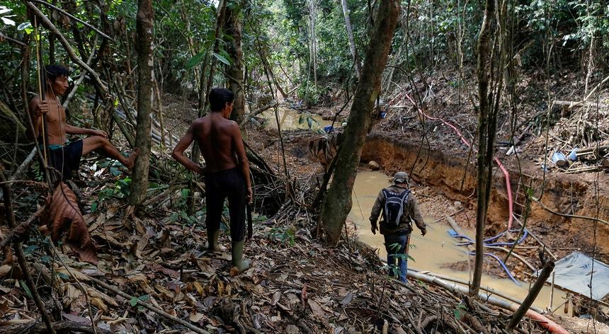 A fiscalização de crimes ambientais está posta em causa no Brasil