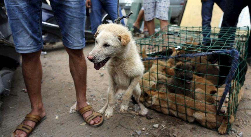 Cães destinados a abate, no festival de Yulin