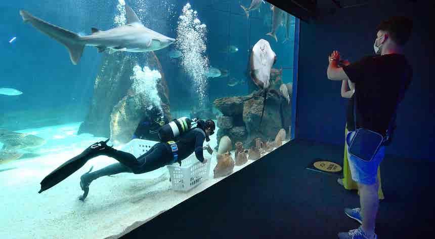 Italianos deixam o aquário aos poucos