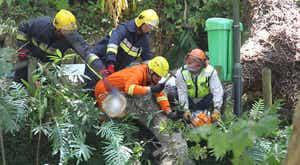 Madeira. Parte de árvore cai no Monte e fere ligeiramente uma mulher