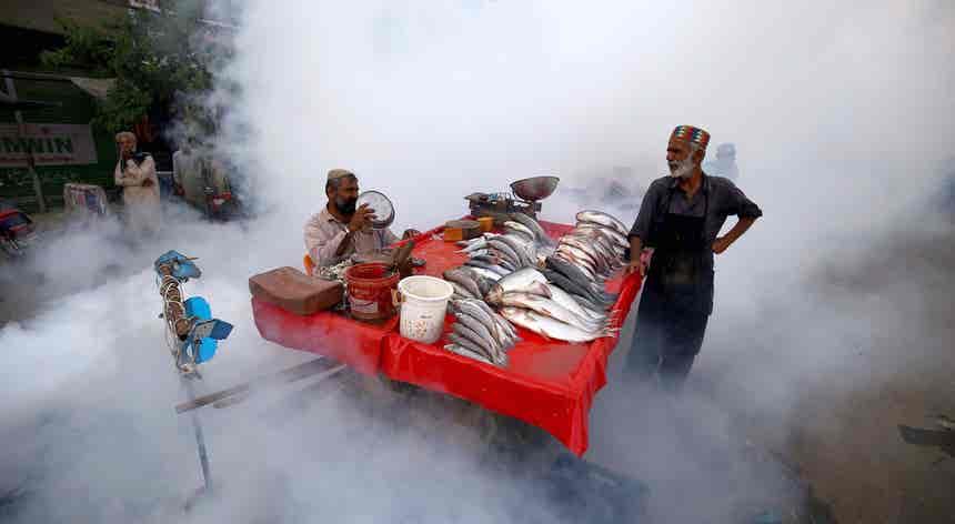 Peixes à prova de dengue
