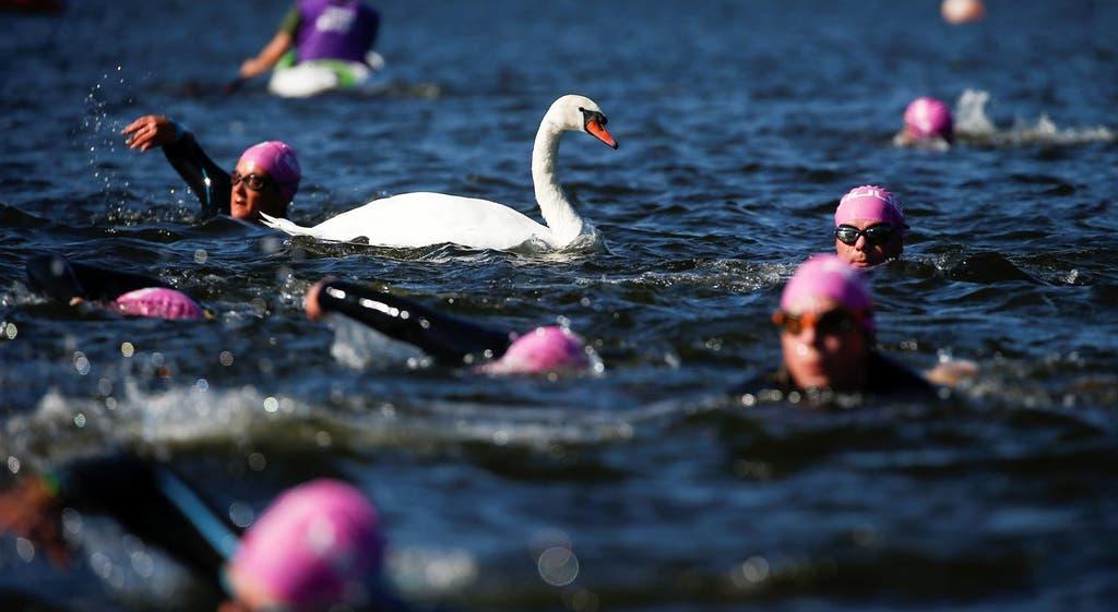 Lago dos Cisnes... a nado