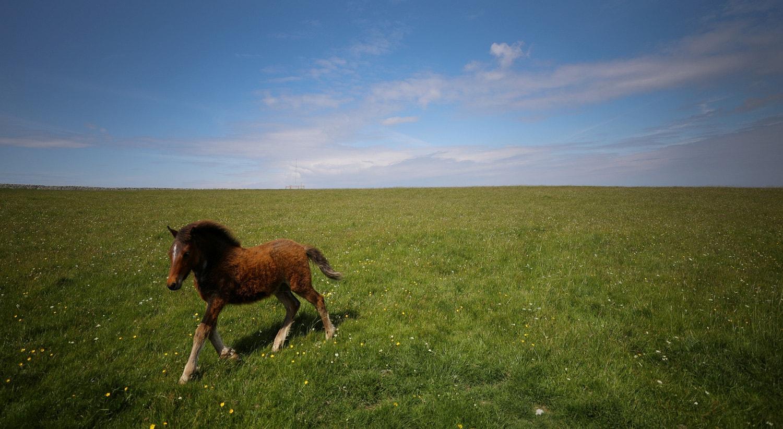 Na ilha Lundy no Reino Unido em maio de 2019 /Phil Noble - Reuters