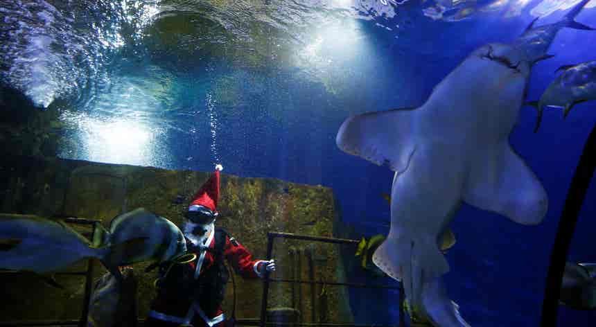 Tubarões recebem visita do Pai Natal