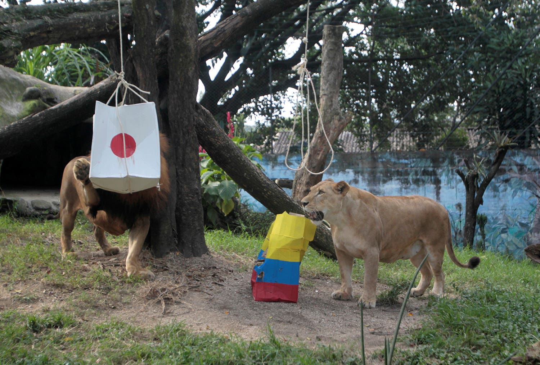 Do zoo de Medellín na Colômbia não acertaram na previsão /Foto: Fredy Builes - Reuters
