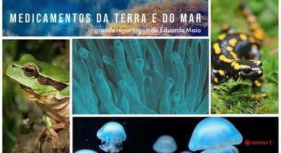 Grande Reportagem Antena 1: Medicamentos da Terra e do Mar