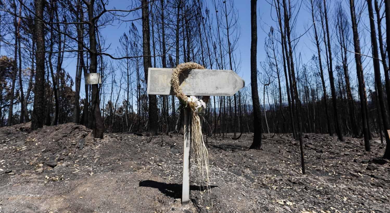 Resultado de imagem para Incêndios: Governo aprova conjunto de medidas de caráter extraordinário
