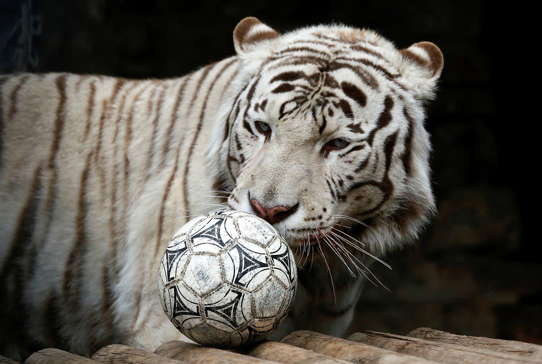 Foto: Ilya Naymushin - Reuters