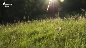 Natureza e Vida Selvagem - O Paraíso das Borboletas