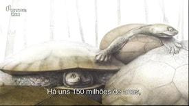 Natureza e Vida Selvagem - Os Nossos Dinossauros