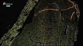 Visita Guiada - Foz Côa