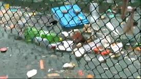 Biosfera - Os Impactos da Atual Sociedade de Plástico