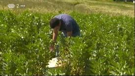 Biosfera - A Produção de Leguminosas