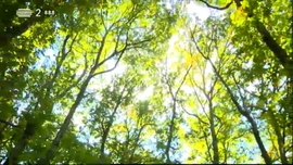 As Alterações Climáticas e a Perda de Biodiversidade
