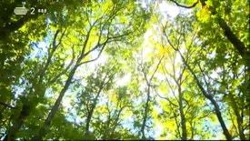 Biosfera - As Alterações Climáticas e a Perda de Biodiversidade