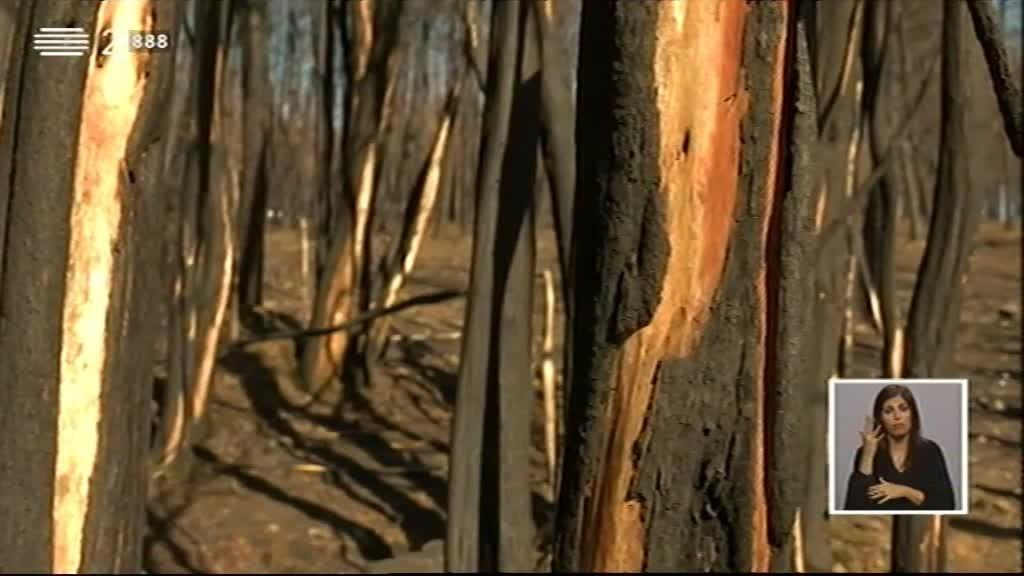 Incêndios Florestais 2017 - II