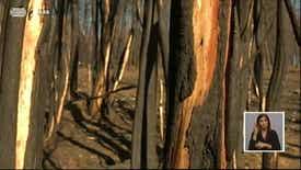 Biosfera - Incêndios Florestais 2017 - II