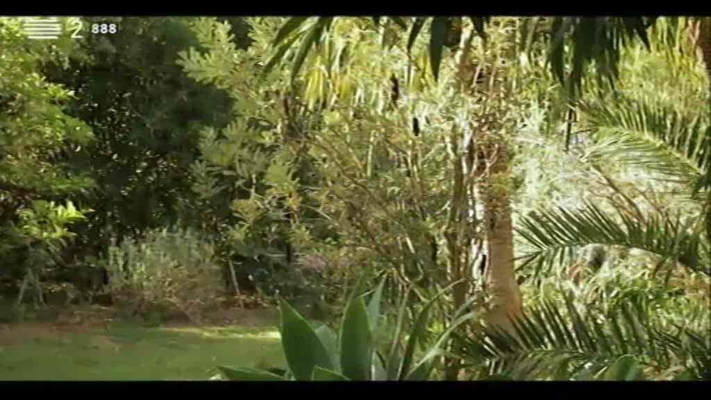 Jardim Mandihari, Almancil