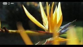 Paraíso - Quinta da Piedade