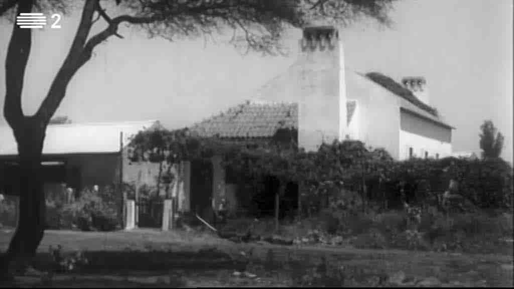 O Colonato do Limpopo...