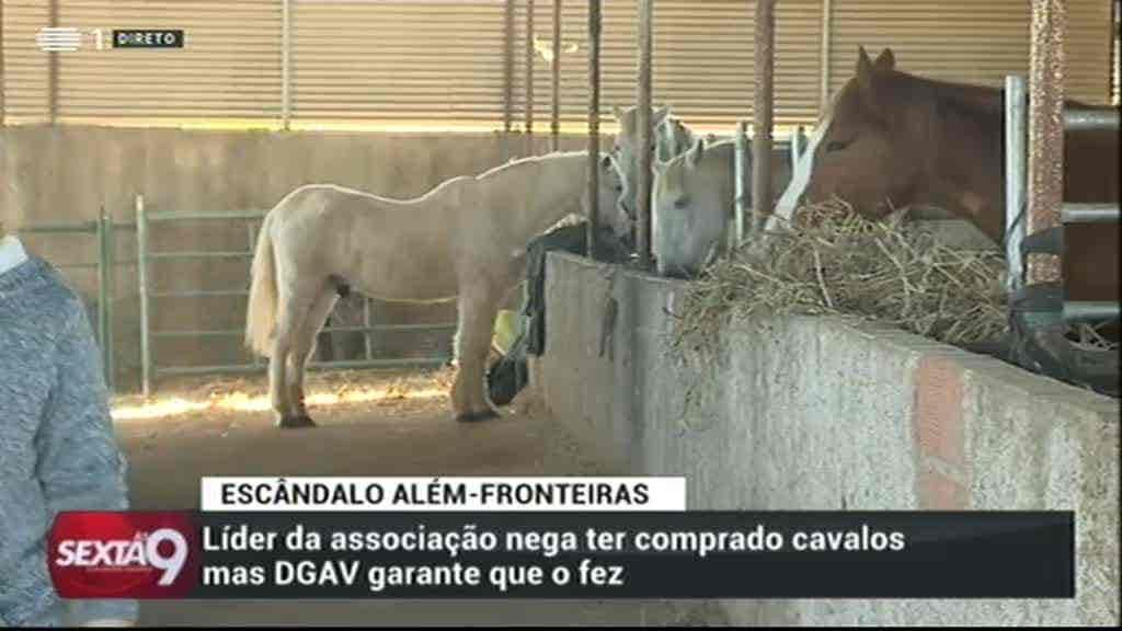 Burla à Custa do Amor a Cavalos...