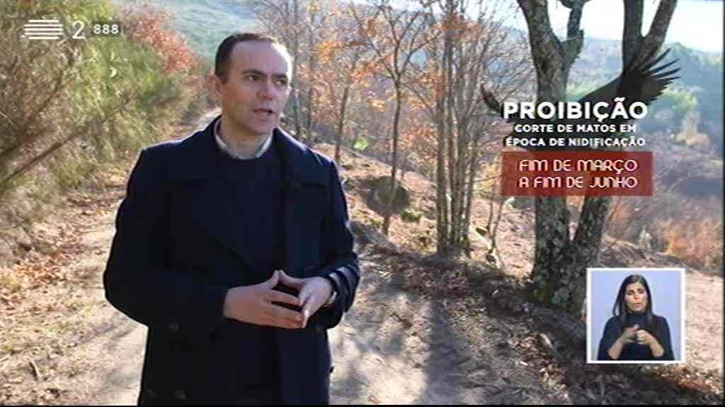 Prevenção dos Incêndios Florestais...