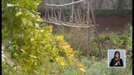 Jardins Comestíveis
