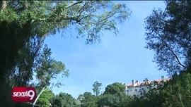 Quercus sob Suspeita