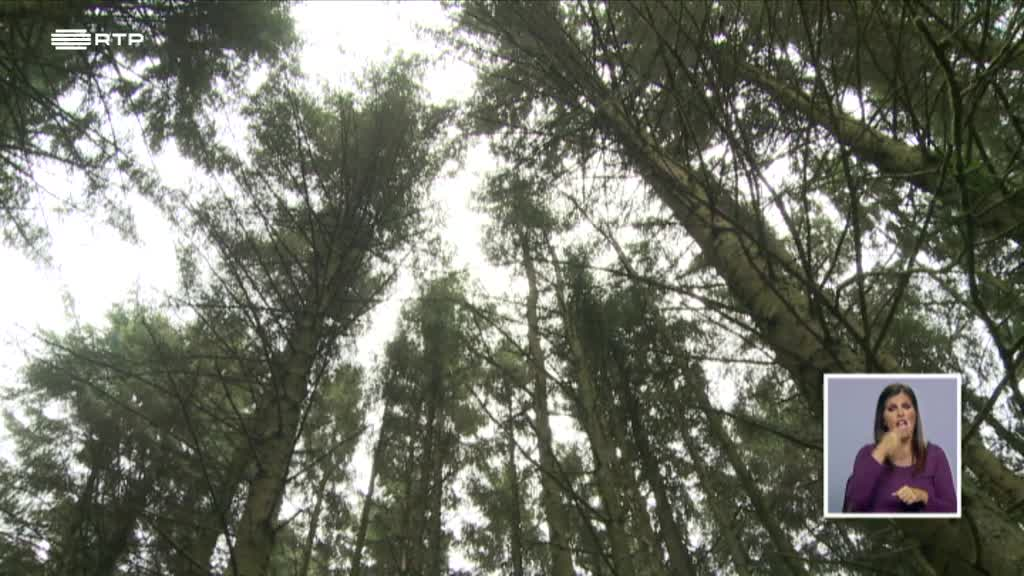 Floresta e Incêndio - Porque Ardem as Florestas?