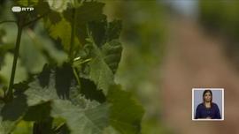 Como Promover a Biodiversidade em Contexto de Produção Agrícola?