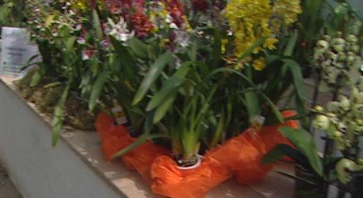 Jardim Botânico com exposição de orquídeas I