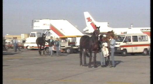 Chegada de cavalos ao aeroporto