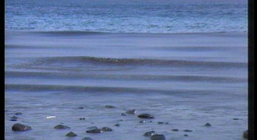 Ponto da situação da maré negra que assola o Porto Santo